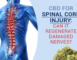 cbd-for-spinal-cord