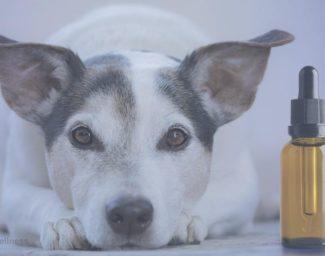 best-cbd-oils-for-dogs