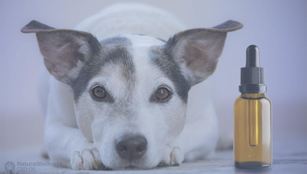 best-cbd-oils-for-dogs